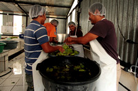 Washing Produce at Caoba Farm